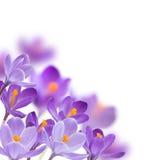 Flores no fundo branco Imagem de Stock