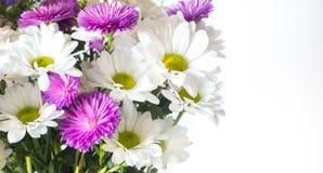 Flores no fundo branco isolado Foto do close-up imagens de stock