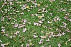 Flores no fundo da grama verde Fotografia de Stock Royalty Free
