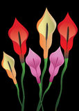 Flores no fundo preto Foto de Stock