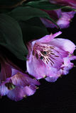 Flores no fundo preto Imagens de Stock