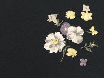Flores no fundo preto Foto de Stock Royalty Free