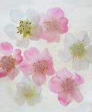 Flores no gelo Foto de Stock Royalty Free