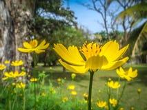 Flores no jardim Foto de Stock Royalty Free