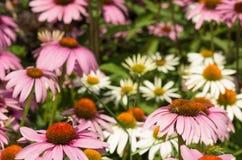 Flores no jardim Fotos de Stock Royalty Free