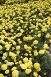 Flores no jardim Imagens de Stock Royalty Free