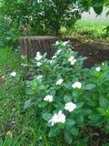 Flores no jardim foto de stock