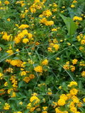 Flores no jardim Fotos de Stock