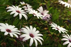 Flores no jardim botânico Foto de Stock Royalty Free