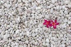 Flores no jardim de rocha Imagem de Stock Royalty Free