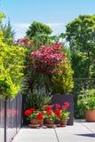 Flores no jardim do terraço imagem de stock royalty free