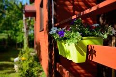 Flores no jardim, potenciômetro Fotos de Stock