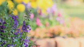 Flores no jardim, vdo de HD video estoque