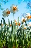 Flores no Keukenhof Fotos de Stock