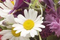 Flores no macro branco fotografia de stock royalty free