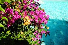 Flores no mar Fotografia de Stock