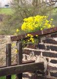 Flores no muralha Fotografia de Stock Royalty Free