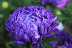 Flores no país foto de stock