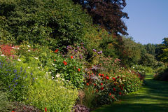 Flores no parque Foto de Stock Royalty Free