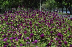 Flores no parque Foto de Stock