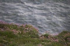 Flores no penhasco Portland Imagem de Stock