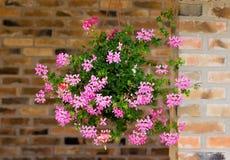 Flores no potenciômetro de suspensão Imagens de Stock