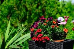 Flores no potenciômetro do rattan Imagens de Stock
