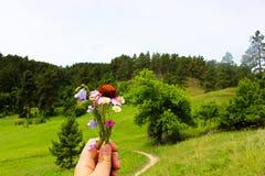 Flores no prado imagem de stock