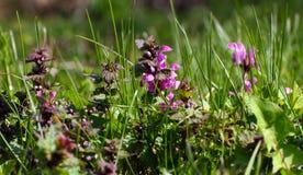 Flores no prado Fotografia de Stock