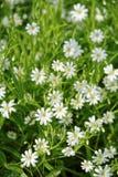 Flores no prado Fotografia de Stock Royalty Free