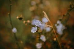 Flores no prado do verão Foto de Stock Royalty Free