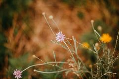 Flores no prado do verão Imagens de Stock Royalty Free
