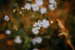 Flores no prado do verão fotografia de stock