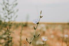 Flores no prado do verão Imagens de Stock
