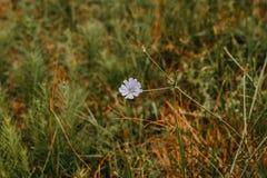 Flores no prado do verão Fotos de Stock