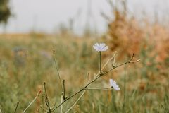 Flores no prado do verão Imagem de Stock