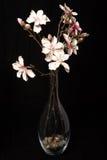 Flores no preto fotografia de stock