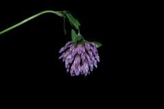 Flores no primeiro plano em um fundo preto Foto de Stock Royalty Free