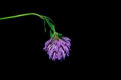 Flores no primeiro plano em um fundo preto Fotos de Stock