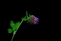 Flores no primeiro plano em um fundo preto Imagem de Stock