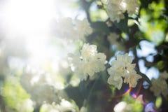 Flores no ramo e nos raios de sol Fotografia de Stock