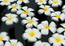 Flores no salão de beleza dos termas Imagens de Stock Royalty Free