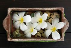 Flores no salão de beleza dos termas Foto de Stock