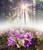 Flores no sol Fotos de Stock