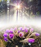 Flores no sol Imagens de Stock