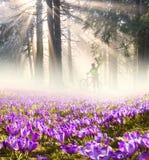 Flores no sol Imagens de Stock Royalty Free