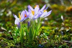 Flores no sol Imagem de Stock