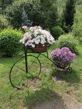 Flores no suporte sob a forma de uma bicicleta Fotografia de Stock Royalty Free