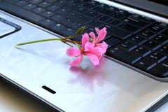 Flores no teclado Fotografia de Stock Royalty Free