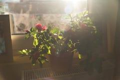 Flores no terraço Fotografia de Stock Royalty Free